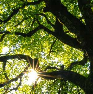 Auprès de mon arbre | Administrateur, superviseur général
